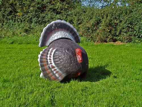 Strutted Turkey - Group 2